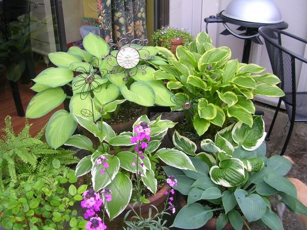 Container Garden,