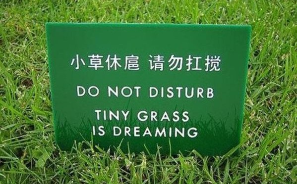 tiny grass is dreaming