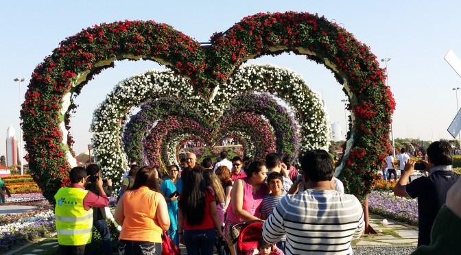 Dubai Miracle Garden! 😍🌻🌼🌸🌹🌺🌷