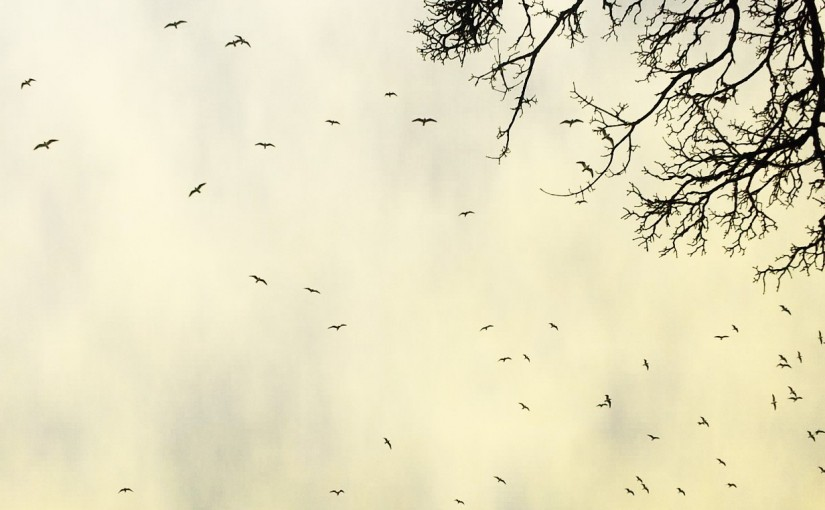 Bird cyclone