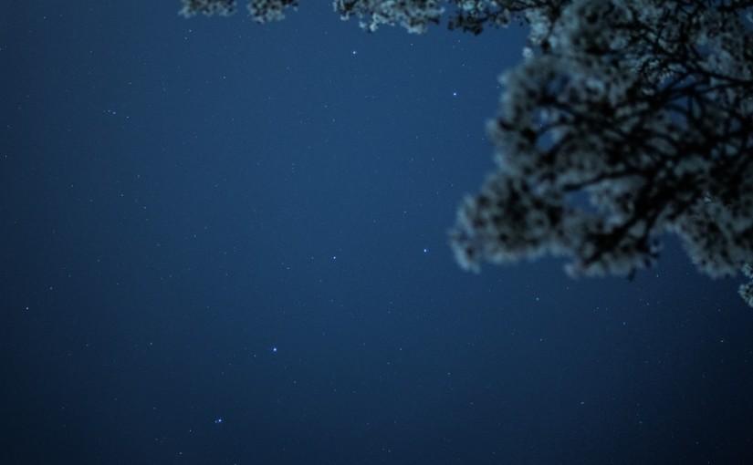 Takuma Kimura_Among The Trees_YU1jQg