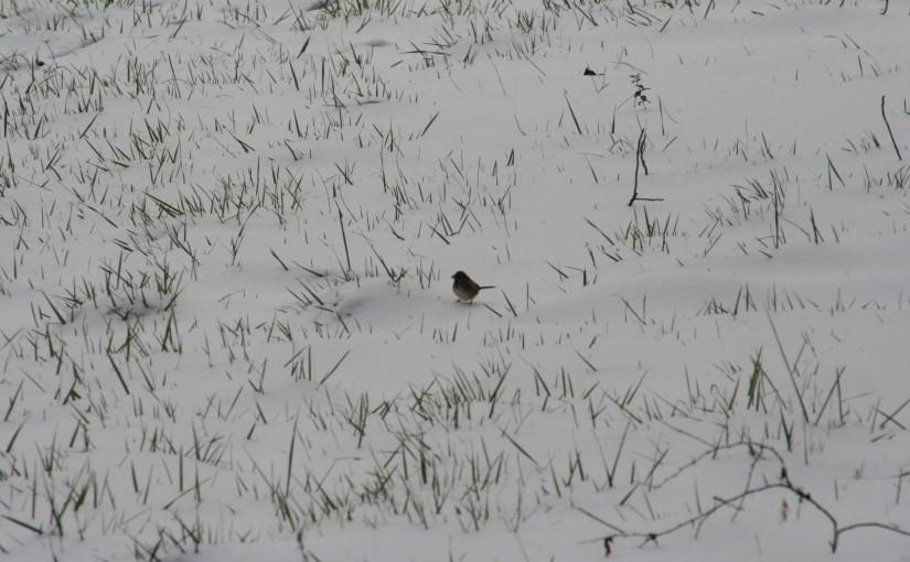 snowy weather 008