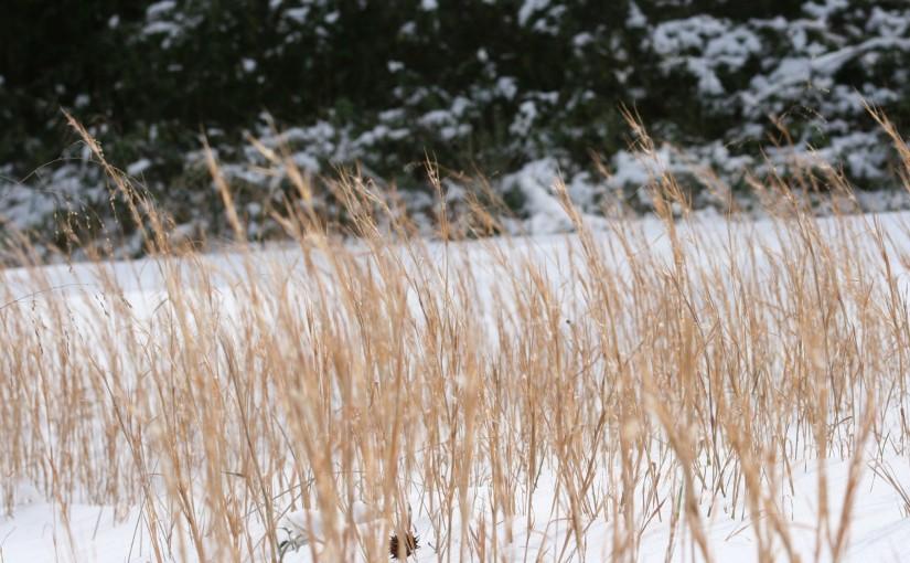snowy weather 017