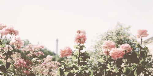 tumblr_inline_mpc3raNxZ51qz4rgp
