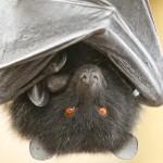 Justy Batty