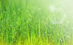 Spring grass sunshine wallpapers 1280x800