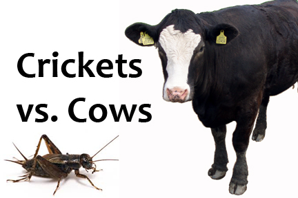 Cows and Crickets
