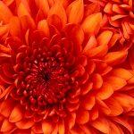 Iloveflowers