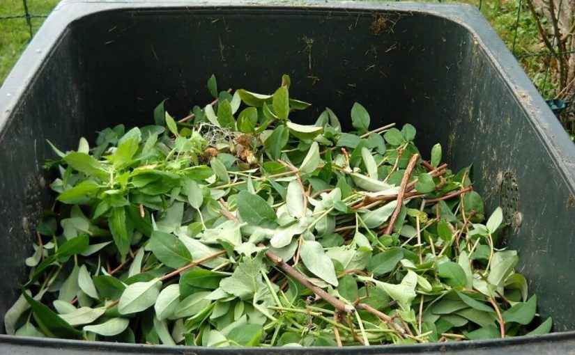 Why You Should Recycle Yard Waste?