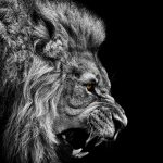 Lionbourne